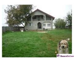 Proprietar ofer Gratuit cazare in vila langa Bucuresti