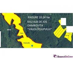 Vand padure netaiata 10.24Ha fag, 4250 Euro/Ha, Dambovita