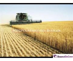 Baneasa - Teren Agricol (36.6 Ha)