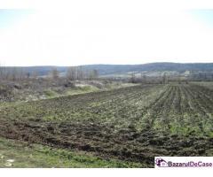 Teren agricol (2 loturi) 4951 mp, Strehaia